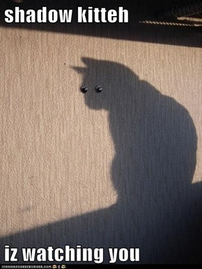 shadow kitteh  iz watching you