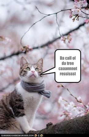Da tree calls