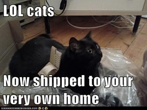 LOL cats  Now shipped to your very own home