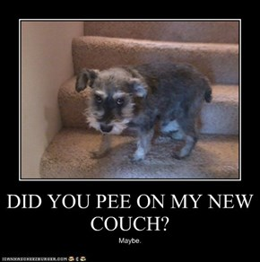 DID YOU PEE ON MY NEW COUCH?