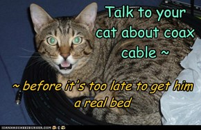 Talk to your cat about coax cable ~