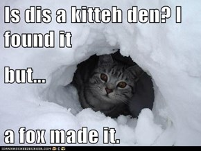 Is dis a kitteh den? I found it but... a fox made it.