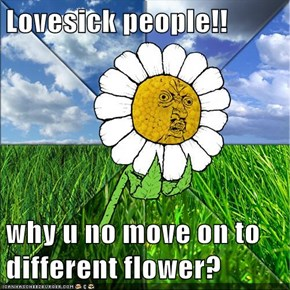 Lovesick people!!  why u no move on to different flower?