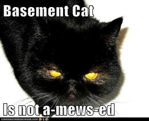 Basement Cat  Is not a-mews-ed