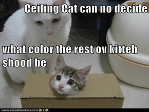 Ceiling Cat can no decide what color the rest ov kitteh shood be