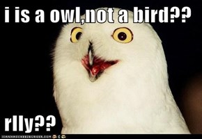 i is a owl,not a bird??  rlly??
