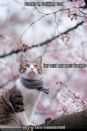 Fanks u, Ceiling Cat  fur awl my new frends dey iz sew wunnerfull