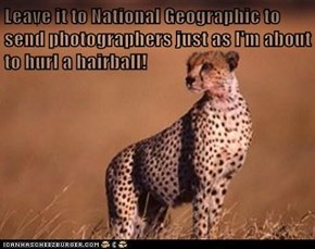 Leave it to National Geographic to send photographers just as I'm about to hurl a hairball!