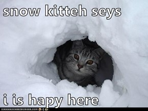 snow kitteh seys  i is hapy here