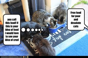 Free food for poor and desolate cats
