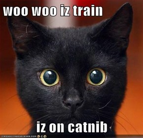 woo woo iz train  iz on catnib