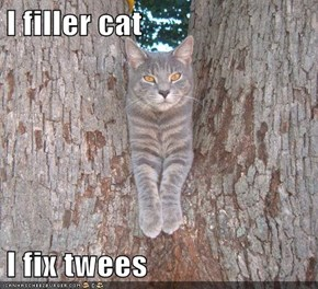 I filler cat  I fix twees