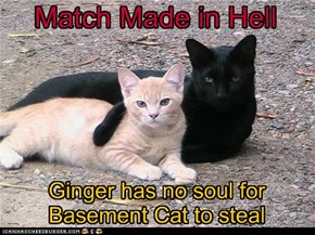 The purrfect match