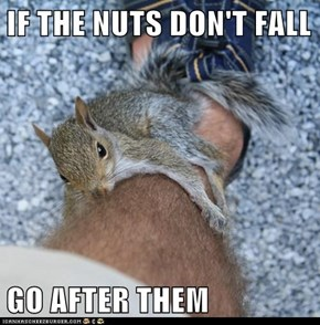 IF THE NUTS DON'T FALL