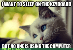 Cat World Problems