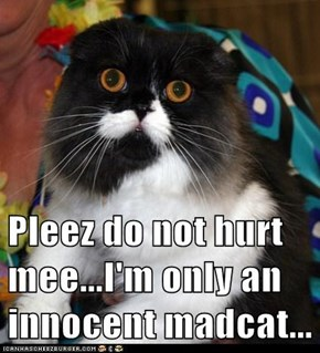 Pleez do not hurt mee...I'm only an innocent madcat...