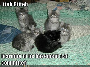 Itteh Bitteh  learning to be basement cat committeh