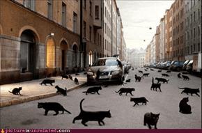 Catpocalypse