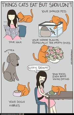Kitteh Komic ob teh Day: Things Cats Eat But Shouldn't