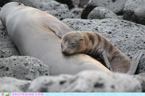 Squee Spree: Family Nap Time