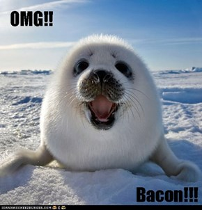 Surprise! BACON!!!