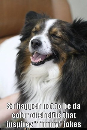 "So happeh not to be da color of sheltie that inspirez ""Timmy"" jokes"