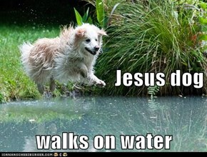 Jesus dog walks on water