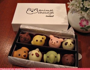 Epicute: Animal Chocolat