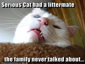 Serious Cat had a littermate  the family never talked about...