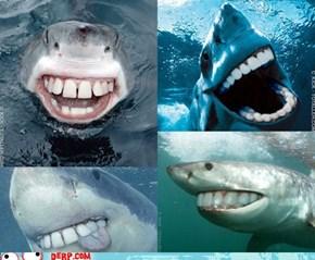 Derpy Jaws