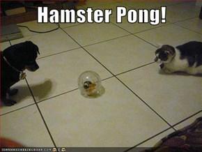 Hamster Pong!