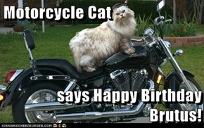 Motorcycle Cat  says Happy Birthday Brutus!