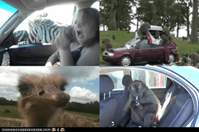 Around the Interwebs: 10 Safaris Gone Horribly (and Hilariously) Wrong (VIDEOS)