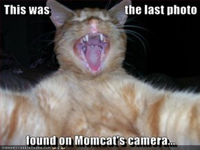 This was                               the last photo  found on Momcat's camera...