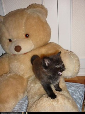 Cyoot Kitteh of teh Day: Ai Slayed teh Ferohshus Bear!