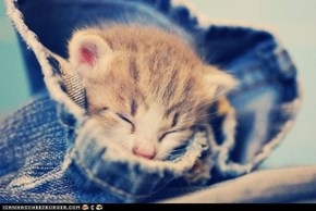 Cyoot Kitteh of teh Day: Blue Denim Baby