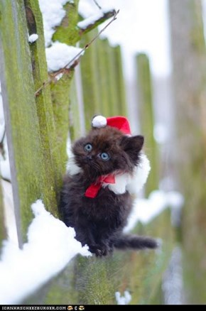 Cyoot Kitteh of teh Day: Iz Ai 2 Layt 4 Chrissymas???
