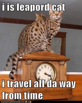 i is leapord cat  i travel all da way from time