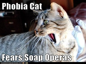 Phobia Cat  Fears Soap Operas