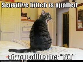 "Sensitive kitteh is apalled  at you calling her ""FAT"""