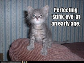 Perfecting 'stink-eye'
