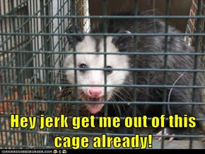Hey jerk get me out of this cage already!