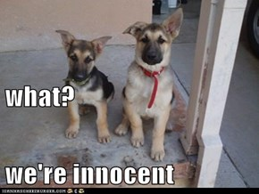 what? we're innocent