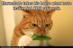 Marmalade takes his house plant taste testing job VERY seriously.