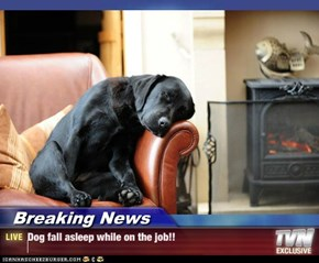Breaking News - Dog fall asleep while on the job!!