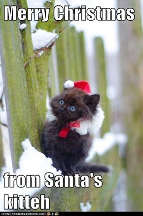 Merry Christmas  from Santa's kitteh