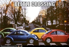 BEETLE CROSSING