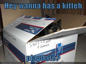 Hey wanna has a kitteh  playdate?