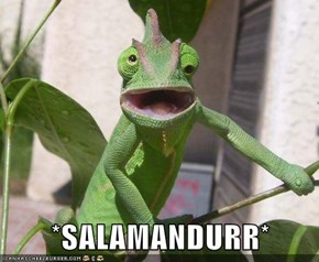 *SALAMANDURR*
