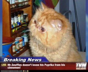 Breaking News - Mr.Snuffles doesn't know his Paprika from his cinnomen!